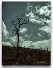 LUZ   E   VOLUME. (manxelalvarez) Tags: contraluz ocaso siluetas anoitecer caatinga terumy