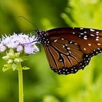 Lady Bird Johnson Wildflower Center-17.jpg thumbnail