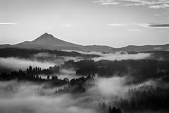 Morning Fog (Brian Pemberton) Tags: 2016 brianpembertonphotography fujifilm jonsrudviewpoint oregon sandy september xpro2 morning fog blackwhite mthood landscape explore