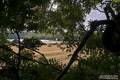 Harvest time (Jason Davies Photography) Tags: harvesttime haybales canon1000d canonphotography canon sigmalenses sigma1850 pembrokeshire landscape photography outdoors trees outdoor visitpembrokeshire tourism llangwm jasondaviesphotography field farmfield crops