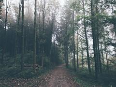 Van Morrison (FlavioSarescia) Tags: nature landscape tres trees forest foggy fog hike walk iphone switzerland