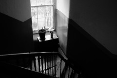 Staircase flowers (Lucky Poet) Tags: glasgow scotland bannister blackwhite dark handrail monochrome plants pots stairs steps tenement window
