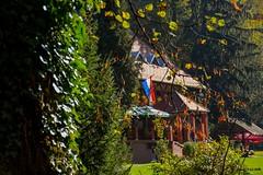 A bit more of wonderful Jankovac (Kuzz1984) Tags: jankovac croatia hrvatska nature priroda green autumn
