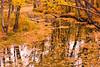 L'automne suit son cours // Fall follows his course (ferlen02) Tags: fall autumn automne feulles multicolores festivaldescouleurs couleurs colors orange quyon cheminpontiac
