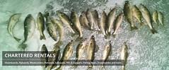 Ice Fishing Chartered-rentals.com (charteredrentalsminnesota) Tags: icefishing icefishingmn icefishingminnesota