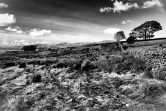 Tyn Gorlan (Missy Jussy) Tags: tyngorlan horizon house holidaycottage wales gwynedd nationalpark landscape sky clouds trees holiday walkinglandscape mono monochrome blackwhite bw farming land fields countryside rural canon cannon600d