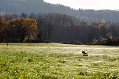 Fils d'Ariane (MarKus Fotos) Tags: feternes gavot ariane araignées chat automne invasion soleil contrejour
