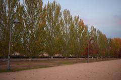 DSC_0272 (victorcollado_9) Tags: arboles nublado farolas verde