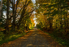 Life. (Matt Champlin) Tags: fgl fall peace peaceful trail thewayforward pathway hope change love life ny skaneatles fingerlakes canon 2016 foliage colorful sunset sun warm warmth