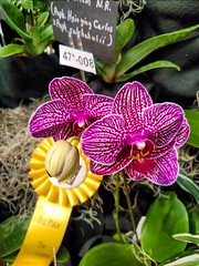 Orchid (Thad Zajdowicz) Tags: 366 365 orchid flower nature plant flora cellphone sanmarino california zajdowicz photoshopexpress availablelight motorola droid turbo mobile indoor inside