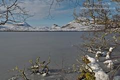 Frozen at Drumrunie (Shuggie!!) Tags: afternoonlight coigach highlands hills ice landscape lichen mountains scotland snow trees winter zenfolio karl williams karlwilliams