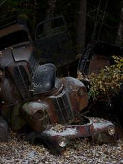 Sprinkled #2 (Eirik0304) Tags: edrussellroberts nikon nikond800 tamron 1735f284 bstns ivanssonsbilskrot dereliction decay ruraldecay autumn automobiles cars sweden
