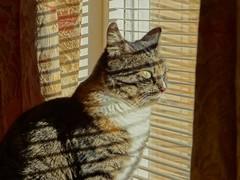 Enjoying the sunlight (Tanumine Photos) Tags: chess fostercat sun shadow window outlook cat pet animal indoor