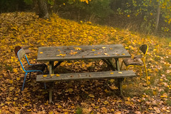 Dîner romantique en sous-bois (Meculda) Tags: automne feuille arbre forêt octobre table chaise jaune banc extérieur