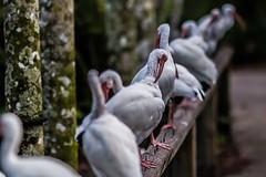 20 (photocat001) Tags: flamingogardens botanicalgardens animals wildlife nature parks recreation interesting