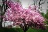 Spring will be back soon (Dan Guimberteau) Tags: soufflenheim alsace france fr tree spring printemps frühling pink nikond90