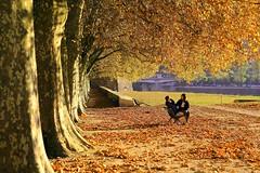 Herbstwonne (ploh1) Tags: herbst goldeneroktober herbststimmung paar menschen frau mann bume laub allee besanon frankreich bltter schneswetter verfrbung