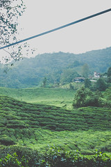 DSCF1118 (tzeyangtan) Tags: cameron highlands getaway green sgpalas tea plantation photography