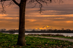 The Shining Mountain ( ) Tags: bc canada mtbaker mountain peak shining goldenhour sunset landscape water waterfront fraserriver bench grass tree snow clouds sky light washington mountbaker