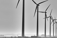 Clean (joto25) Tags: thenetherlands wind power windturbines kinetic electric energy propeller blades rotor generator cleanenergy mist fields horses farms fog blackandwhite bw outdoor noorderhaven silhouette