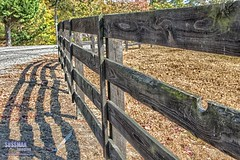 The Fence (The Suss-Man (Mike)) Tags: 52in2016 diagonallines fence gainesville georgia hallcounty lines shadow simpsonfarm sony sonya550 sussmanimaging talmo themediagonallines thesussman week45 wood woodenfence
