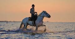 """Das Reiten. Er reitet, sie reitet. Der Mann reitet auf einem Pferd. • <a style=""""font-size:0.8em;"""" href=""""http://www.flickr.com/photos/42554185@N00/30952402301/"""" target=""""_blank"""">View on Flickr</a>"""