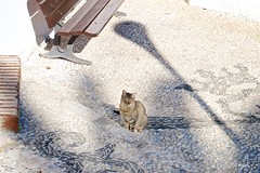 Kitty (Kym.) Tags: andalucia andalusia cat day2 kitty nerja otherpeoplesgang spain