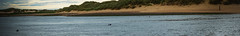 estury (pamelaadam) Tags: newburgh forviesands scotland aberdeenshire june summer 2016 visions meetup animal seal