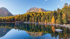 Lagh da Saoseo (lukas schlagenhauf) Tags: laghdasaoseo valdacamp indiansummer autumn larch lake graubnden myswitzerland switzerland valposchiavo