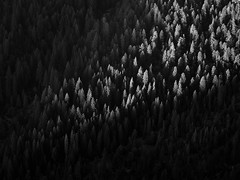 Valley Vignette (Brian Truono Photography) Tags: bw california glacierpoint nps nationalpark nationalparkservice sierranevada yosemite yosemitevalley abstract black canyon conifers contrast forest landscape light natural nature overlook pine shadow shadows sunlight sunset trees valley