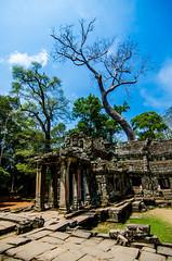 Nature Inside (Arbron) Tags: cambodia taprohm asia2015 rajavihara siemreap temple   krongsiemreap kh