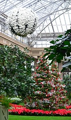 Orangery View (pjpink) Tags: christmas christmassy christmasy christmastree tree festive longwoodgardens conservatory pa pennsylvania november 2016 winter pjpink