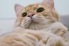 (ChCh Chen) Tags: cat cats kitty kitten kittens lifestyle love 50mm sony