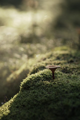 (esmeecadoni) Tags: woods europe netherlands beautifulearth trees sony sun sunlight outdoor autumn simple simplicity minimal light minimalistic littlethings mist holland bokeh photography green fall forest toadstool backlight nature