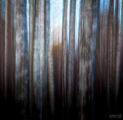 Forward - Always (TorErikP) Tags: trees forest icm intentionalcameramovement