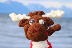 IMG_1736 (The Crochet Crowd) Tags: crochetmoose amigurumi moose crochet doll alaska britishcolumbia thecrochetcrowd michaelsellick jeannesteinhilber danielzondervan crochetcruise mooseontheloose
