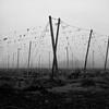 Hop Poles, Oregon (austin granger) Tags: hoppoles oregon hops wires field fallow winter x crop rural farm beer square film gf670