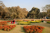 0W6A9112 (Liaqat Ali Vance) Tags: lawrence garden flower trees people google lahore yahoo liaqat ali vance photography punjab pakistan colors