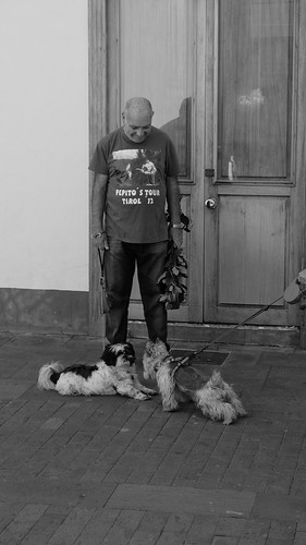 The man and the dogs