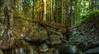Creek in native forest (jvienonen) Tags: creek forest long exposure slow shutter
