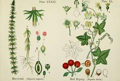 Anglų lietuvių žodynas. Žodis red bryony reiškia raudona bryony lietuviškai.