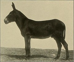 Anglų lietuvių žodynas. Žodis horse latitude reiškia arklių platumoje lietuviškai.
