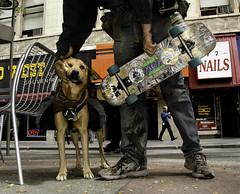 Skateboarder and Dog (photographyguy) Tags: dog animal colorado open canine denver sidewalk nails skateboard mansbestfriend skateboarder 16thstreetmall