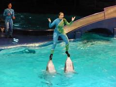 Dolphin show, Dolfinarium.nl 2014 (Alta alatis patent) Tags: lift dolphins dolfinarium onnoses