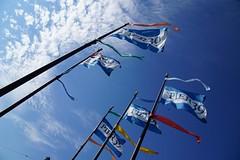 Pier 39 Flags (disneyland.kid) Tags: sf sanfrancisco california ca usa marina boat dock ship yacht flag flags wharf sail fishermans slip pier39 docking