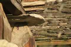 Heidadorf Visperterminen (Heidadorf Visperterminen) Tags: holidays wasserfall natur blumen zermatt wallis wandern heida valais simplon saasfee maikfer blausee oberwallis bietschhorn visp visperterminen suone heido schwarznasenschafe walliserteller beitra geiss heidadorf schwarzhalsziegen suonenwanderung heidawein highonheida wiigrill