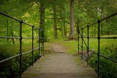 Over the Bridge (Ludvius) Tags: bridge forest ludovicophotography wwwludovicophotocom
