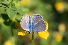 (X'ian) Tags: butterfly butterflies lepidoptera papillon mariposa farfalla schmetterlinge schmetterling vlinder papillons kelebek farfalle lpidoptre lpidoptres