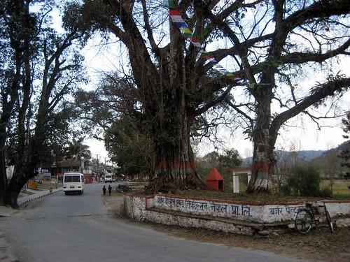 sarangot 002