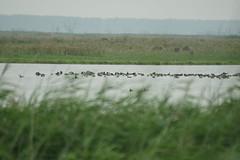 DSC06422 (Ton Smilde) Tags: oostvaardersplassen naturereserveinthenetherlands